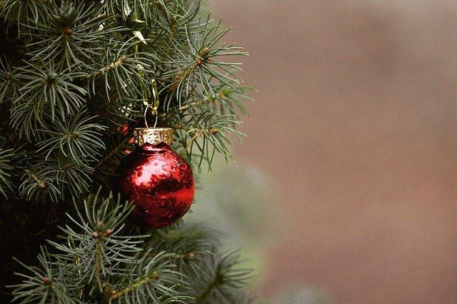Le sapin: véritable symbole de la Noël